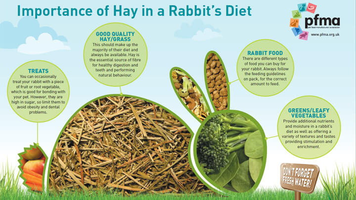 Download The Importance Of Hay For Rabbits Poster