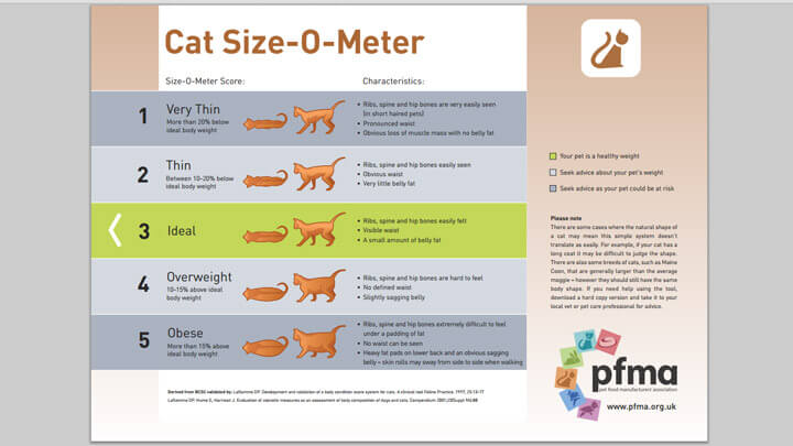 Download Cat Size-O-Meter