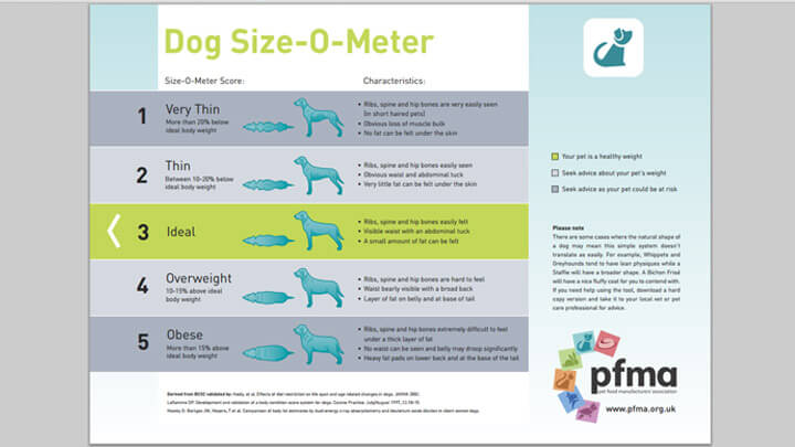 Download Dog Size-O-Meter