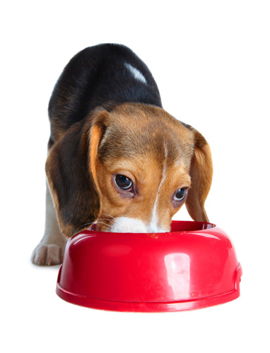 Can You Feed Dog S Food After Best By Date