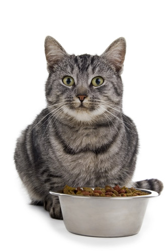 Should Cats Eat From The Same Bowl