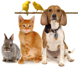 rabbit, cat dog and 2 yellow birds