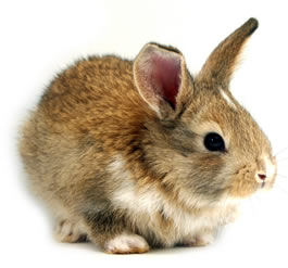 rabbit_isolated_22.jpg