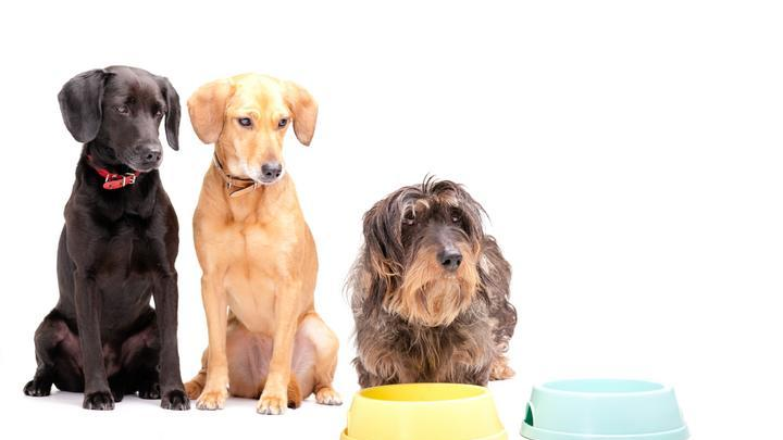 PFMA Launching World Leading Programme for Best Practice Raw Pet Food production