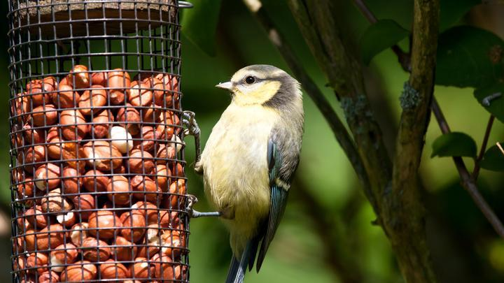 Different species of birds have different nutritional needs – how to feed the variety in your garden