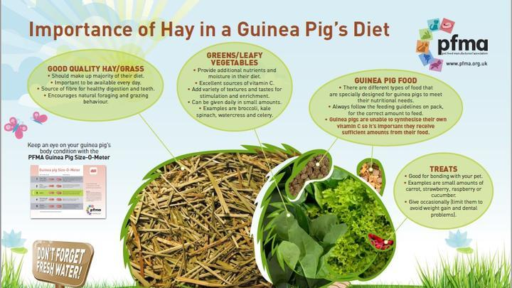 The importance of Hay for Guinea Pigs – New Educational Poster from PFMA