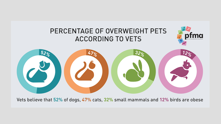 Vet Survey shows a rise in Dog and Cat Obesity - PFMA launches new Obesity Poster 'Get Hands on with your Pet'