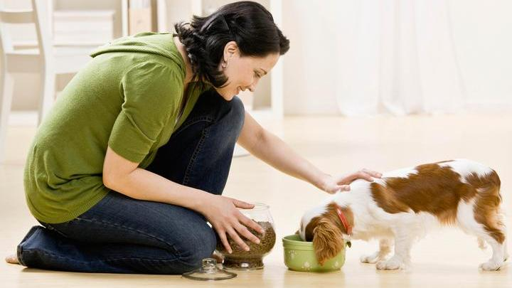 Pet supplements - are they necessary?