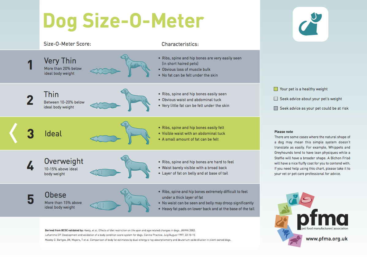 Dog size o meter as a dog owner you should be checking your dogs weight regularly why not print off our downloadable nvjuhfo Gallery