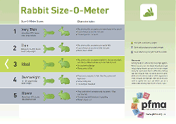 don t forget to read all about caring for your rabbit in our rabbit