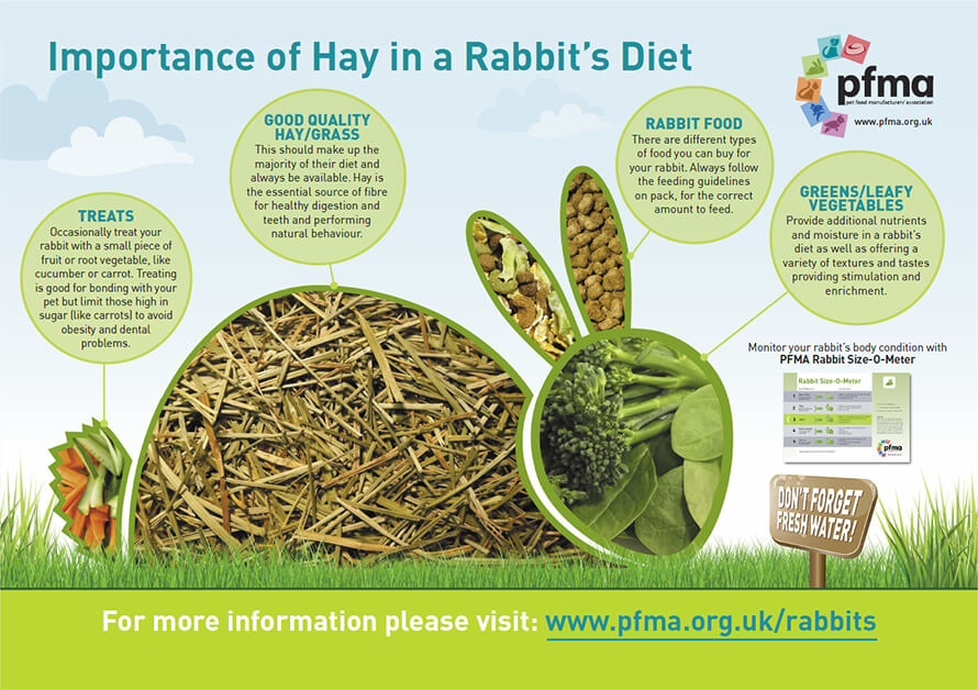 what is the rabbits diet